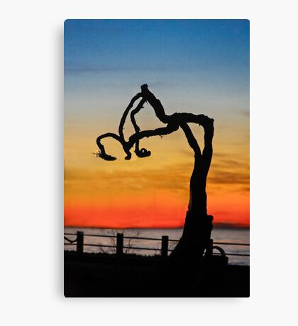 Bent & Weary...Making a Statement Canvas Print