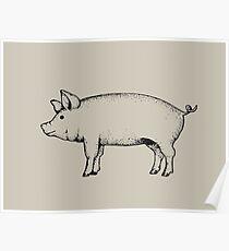 Pig Outline Art: Standing Pig: Hog Drawing Poster