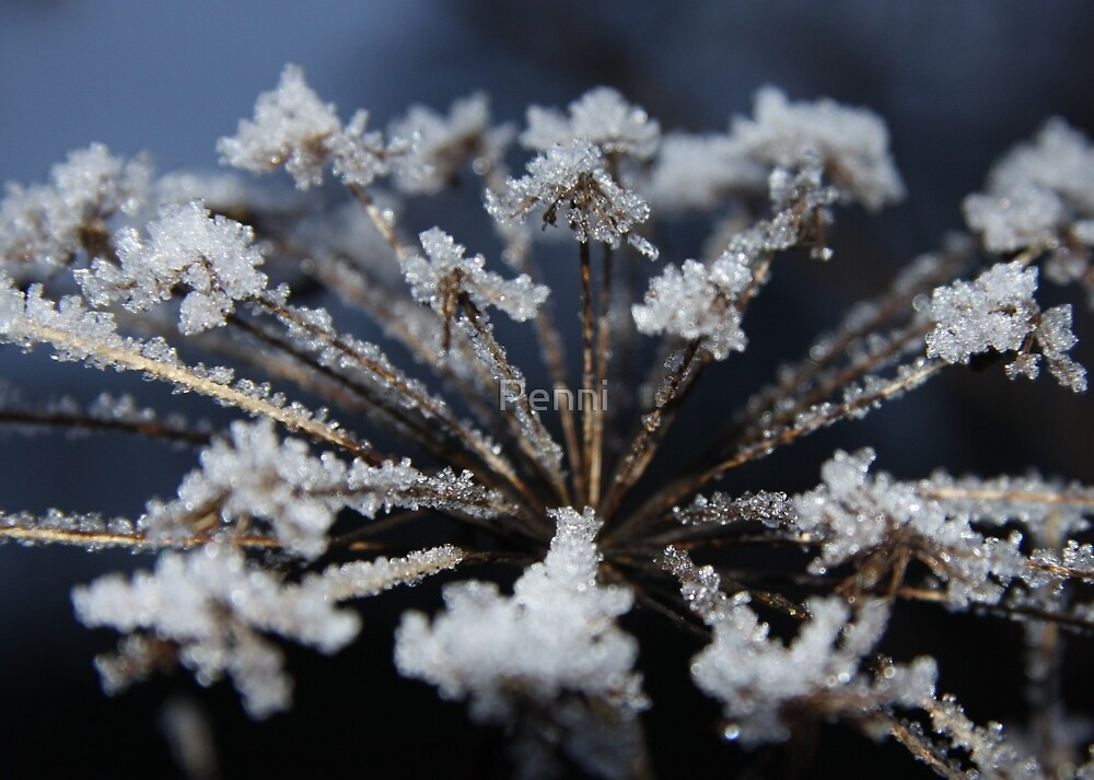 The Wonder of nature - ice crystals by Penni