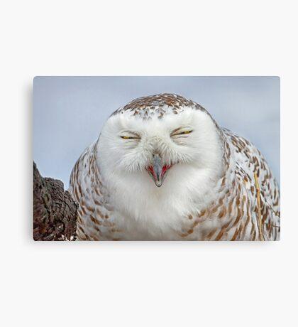 Smiling Snowy Owl Canvas Print