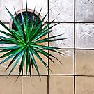 Cordyline - tropical pot plant by dcarphoto