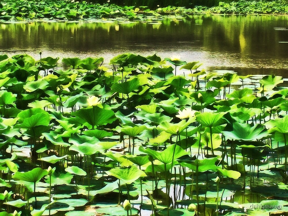 Water Lotus Garden by Shawna Rowe