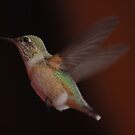 Hummingbird by Robert Armendariz