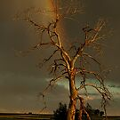 Rainbow Tree by Gregory J Summers
