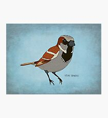 The House Sparrow Photographic Print