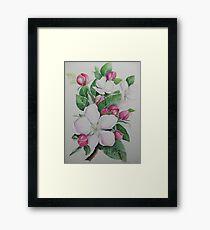 Apple blossom flower floral spring flowers Framed Print