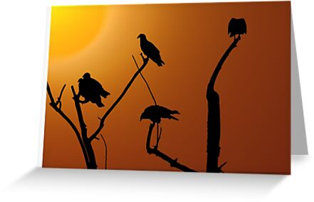 Vulture Roost by CarolM