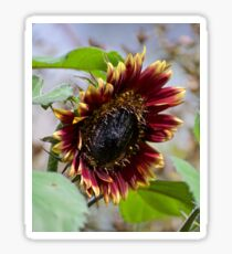 JUST PHOTOS ~ FLORAL ~ Burgundy and Flame by tasmanianartist Sticker