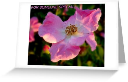 FOR SOMEONE SPECIAL by trisha22