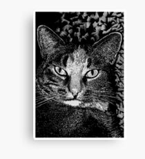 Blink! Canvas Print