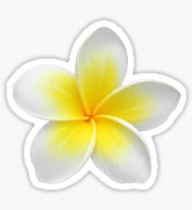 Hawaiian Plumeria Sticker