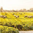 Rural landscape in Holland by gianliguori