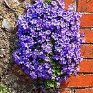 Purple Aubrieta by Ludwig Wagner