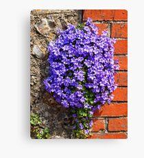Purple Aubrieta Canvas Print