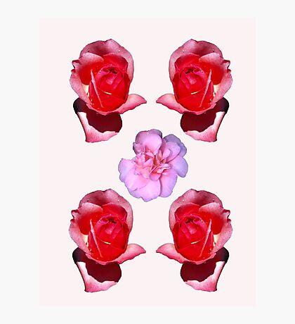 Rose v Camellia Photographic Print
