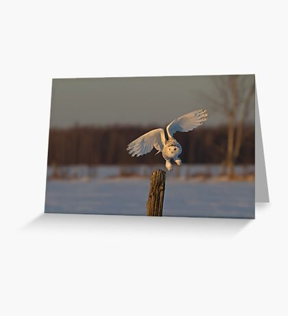 Snowy Owl taking off Greeting Card