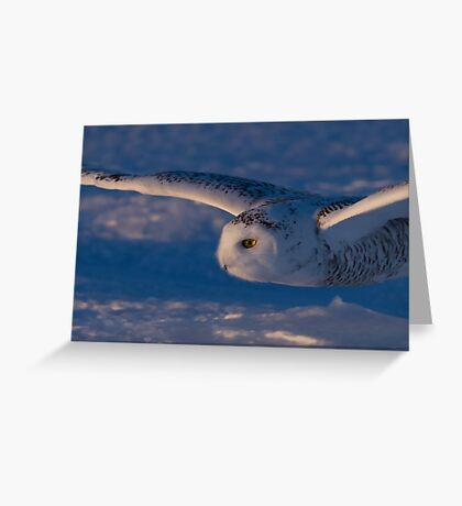 Snowy Owl flys at Sunset Greeting Card