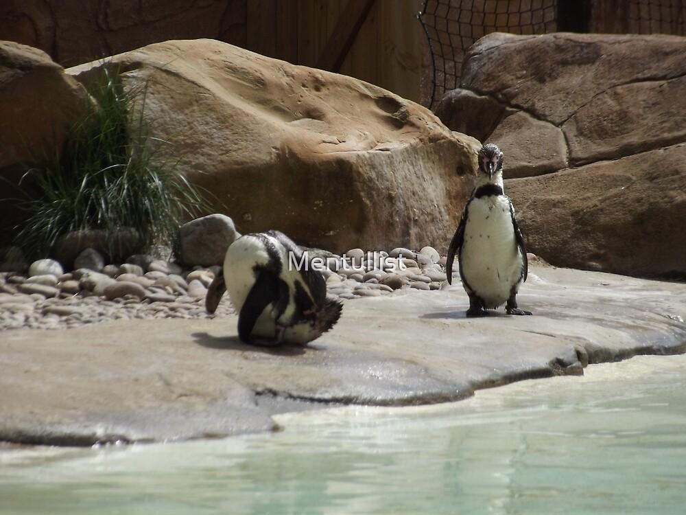 Penguins by Mentullist