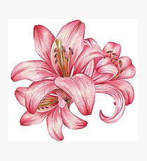 lily flowers_3 Photographic Print