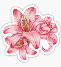 lily flowers_3 Sticker