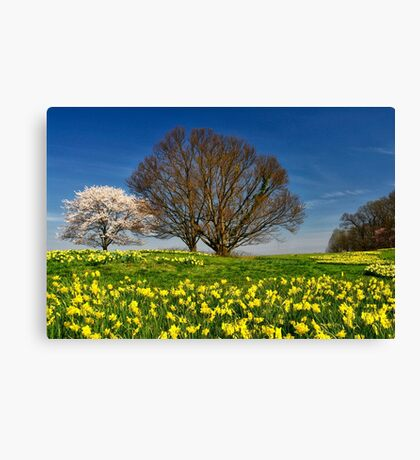 It's Spring! Canvas Print