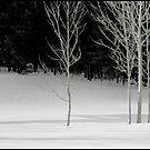 Poplar Shadows by Wayne King