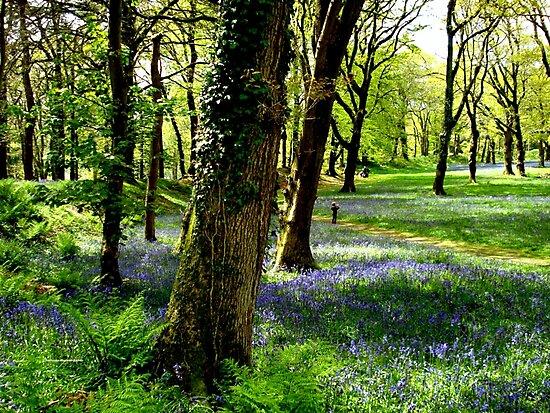 Bluebell Heaven by Charmiene Maxwell-Batten