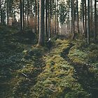 Boy walking through mystic forest landscape photography by regnumsaturni
