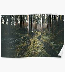 Boy walking through mystic forest landscape photography Poster