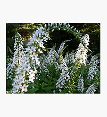 White flowers are not boring! Photographic Print