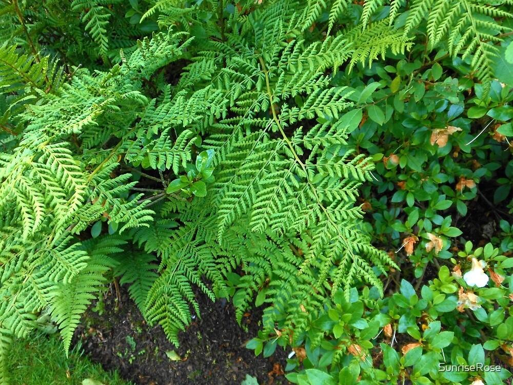 Ferns by SunriseRose