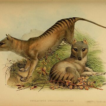 Thylacine - The Tasmanian Tiger by c-w-w