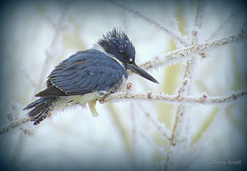 Weathering The Weather...Blue Kingfisher by Diane Arndt
