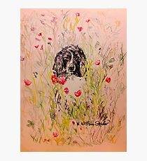 Wildflower Springer Photographic Print