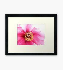 Spring Altered Pink Peony Framed Print