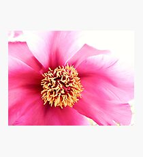 Spring Altered Pink Peony Photographic Print