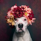Flower Power Lizzy by Sophie Gamand