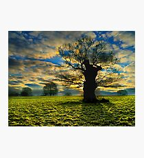 Sunrise On A Windsor Oak Photographic Print