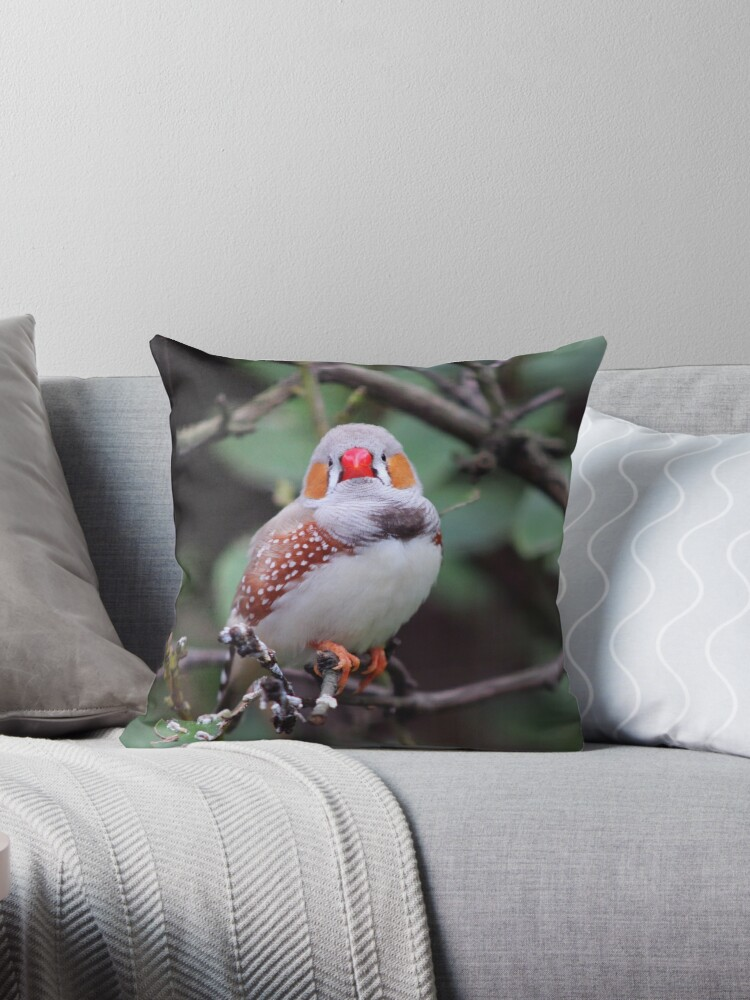 Zebra Finch by Vicki Spindler (VHS Photography)