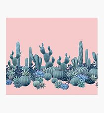 Serenity Cacti on Rose Quartz Background Photographic Print