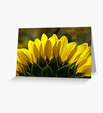Mississinewa Sunflower Abstract by Mother Nature  Greeting Card