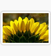 Mississinewa Sunflower Abstract by Mother Nature  Sticker