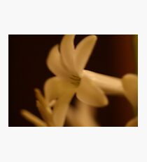 stephanotis in sepia tones by bs hilton Photographic Print