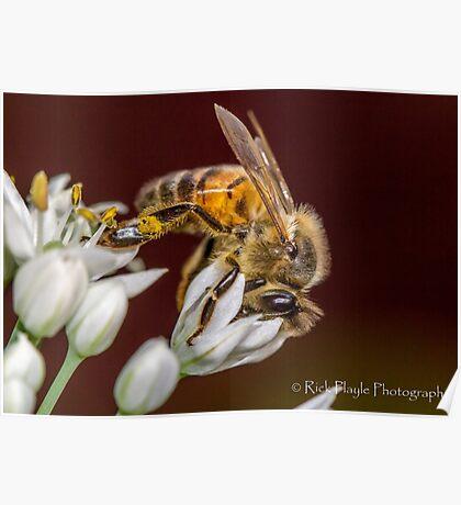 Beewonder Poster