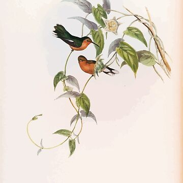 A monograph of the Trochilidæ or family of humming birds by John Gould 1861 V2 070 Leucippus Fallax by wetdryvac
