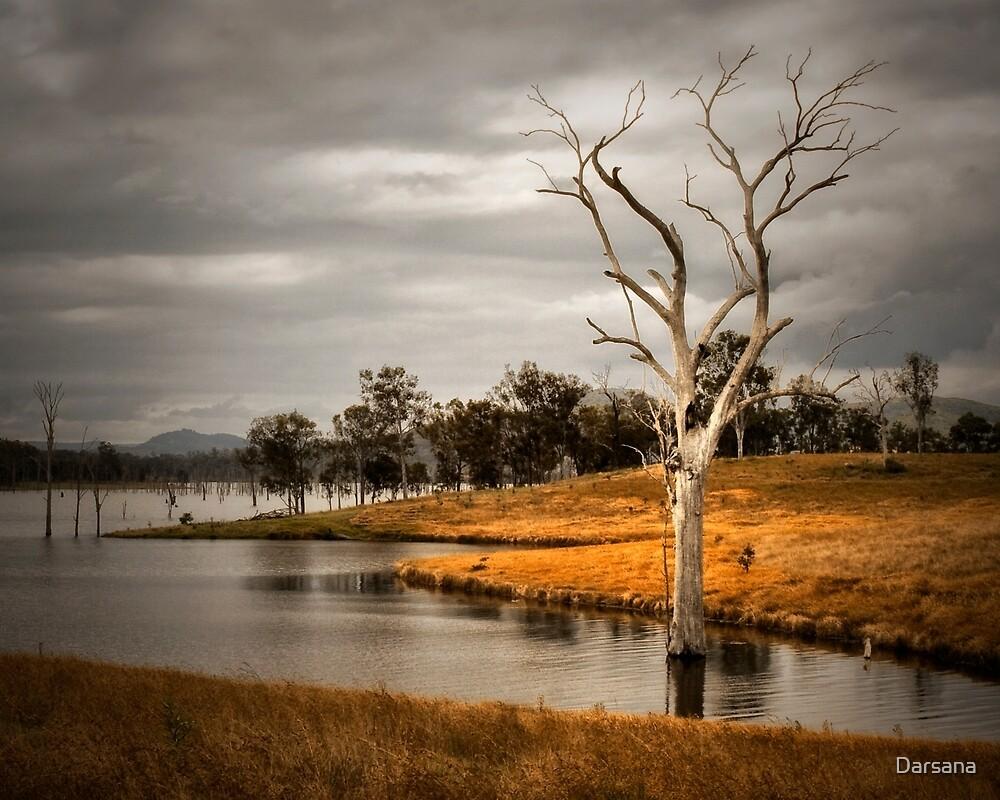 Solitary Tree by Tony Steinberg