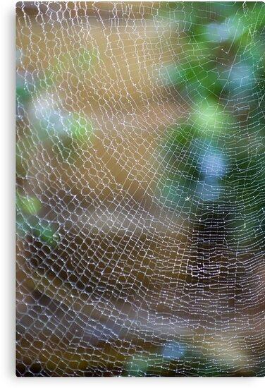 Golden Silk Orb Weaver's Web Design Magic by Kerryn Madsen-Pietsch