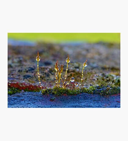 Macro Moss Grass 2 Photographic Print