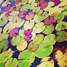 Lilypads by Robert Steadman