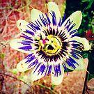 Flower by Robert Steadman